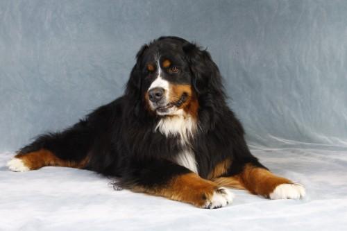 Heidis dog